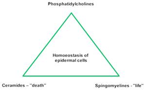 homoeostasis