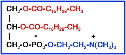 formula of phosphatidylcholine