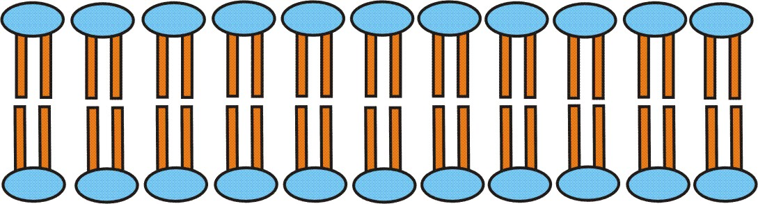keratinozyten in der haut
