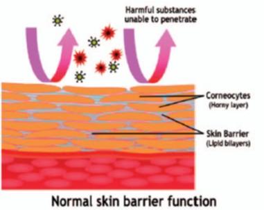 normal skin barrier function